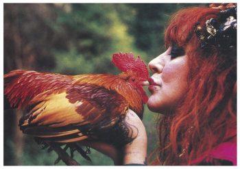 9vali rooster carolb